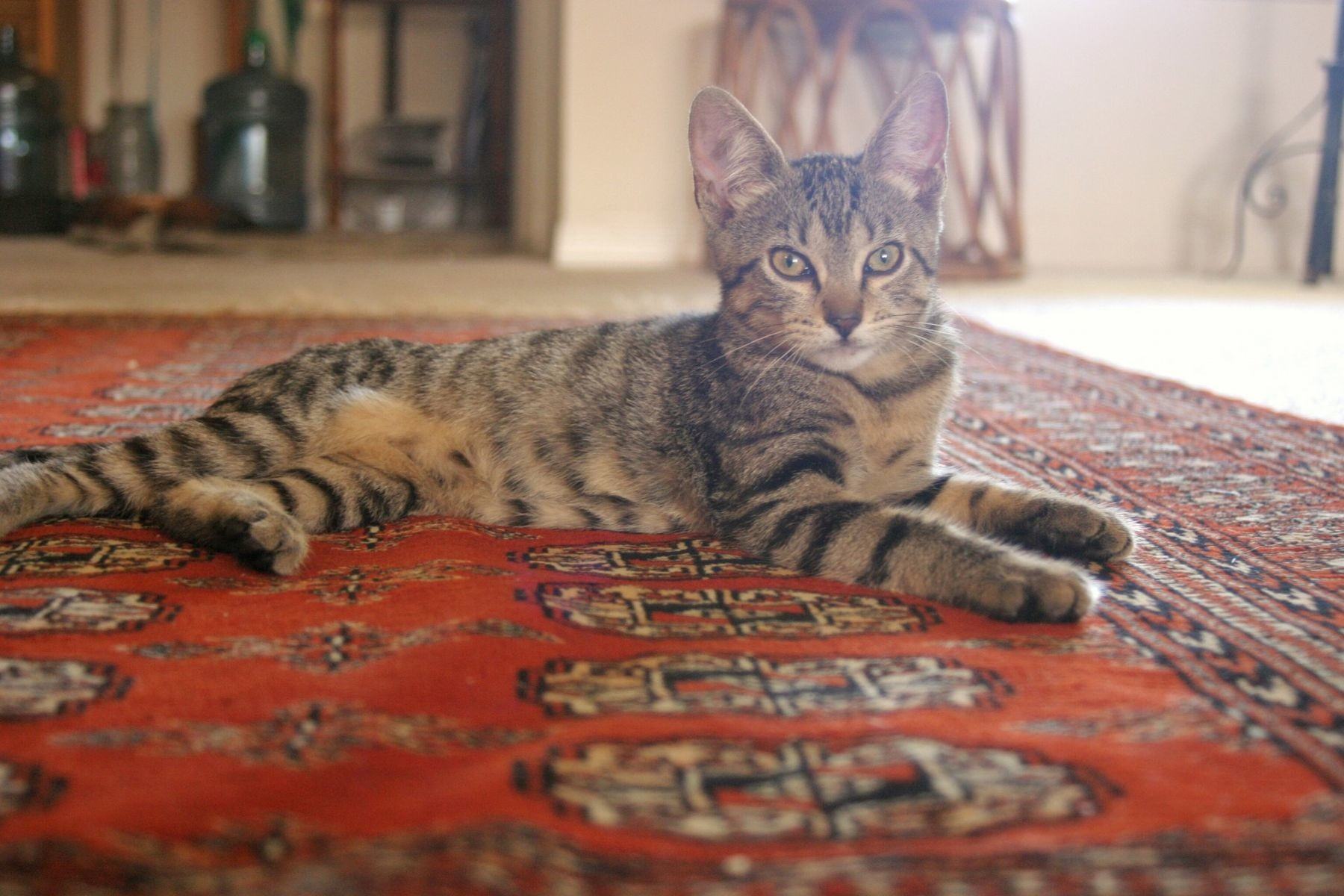 Oriental Rug Cleaning by Praise