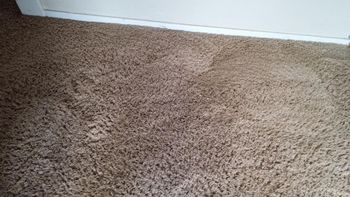 Carpet Cleaning in Hillsboro